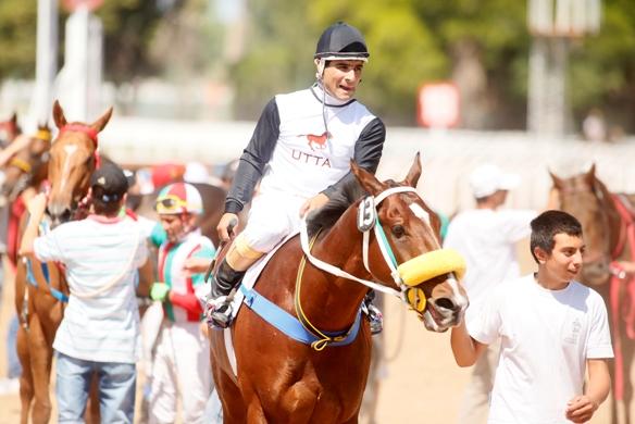 caballo de carrera